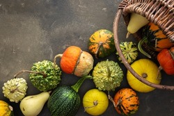 Decorative and edible pumpkinsfall out of a wicker basket on a green background, top view, autumn background, copy space