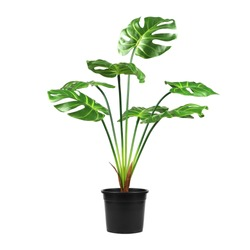 Decorative artificial monstera tree in pot isolated on white background