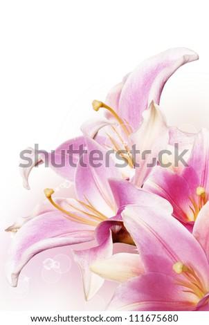 Decorative beautiful pink lily