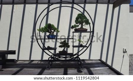Decorative Bonsai with decorative shelves #1119542804