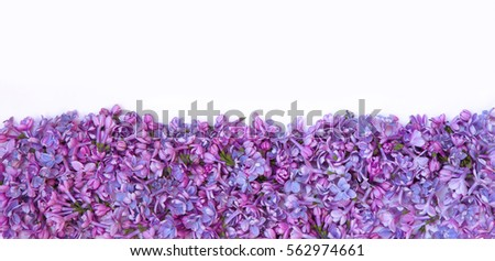 Decorative Border Pattern of fresh lilac Flowers lying on white background on the bottom. Beautiful Blank Card for invitation, congratulation. Top view, Flat lay. Wide Web banner With Copy Space
