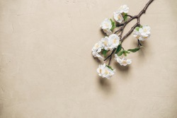 Decorative branch blooming cherry on a beige concrete background. Spring beautiful background. Top view, flat lay