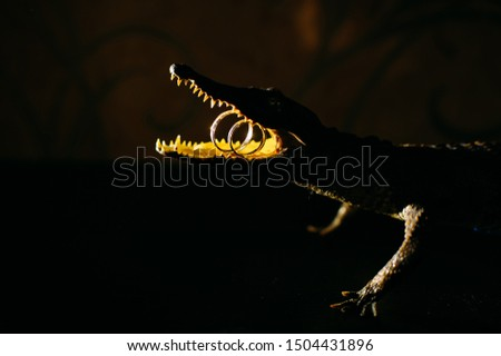 Decorative bronze figure of crocodile with wedding rings in the mouth, close-up. Concept of difficulties in the life of newlyweds. Unusual jewelry.