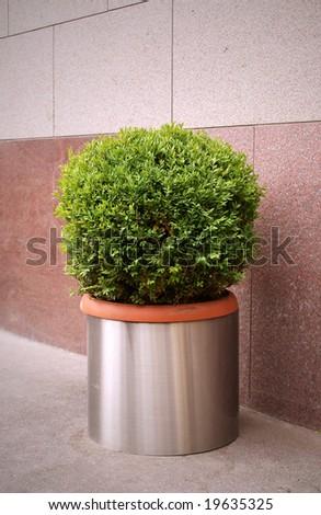 Decorative bush in a big pot