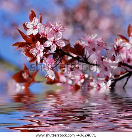 Decorative cherry tree blossoms above water with reflection, digital effect