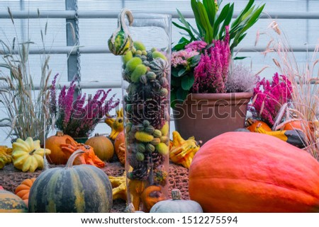 Decorative floral vegetable composition: a variety of pumpkins, zucchini, squash, decorative prickly cucumbers, fir cones, pink hydrangea flowers and Heather varieties Erica. Autumn and harvest fest