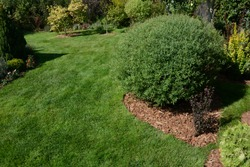 Decorative flowerbed on the lawn, mulched with pine bark. Pine bark as mulch for trees and shrubs in gardens and parks. Pine mulch as protection from soil drying. Summer sunny day.