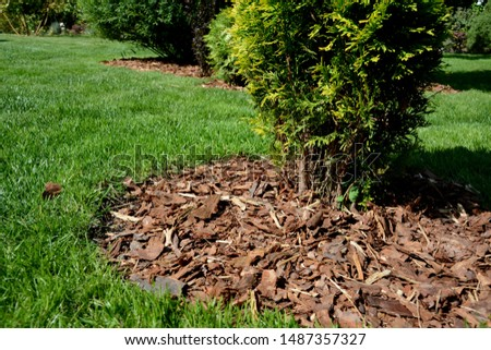 Decorative flowerbed on the lawn, mulched with pine bark. Pine bark as mulch in the garden. Sunny summer day.