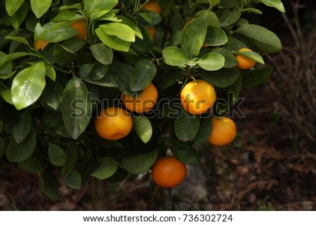Decorative garden orange #736302724