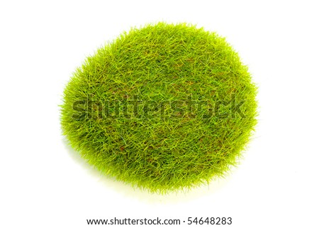 bush plant pictures. grass ush plant at white