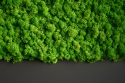 Decorative green moss plant on the wall. Background with copy space. Picture from organic material. Office style, interior design elements.