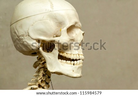 Decorative (model) human skeleton and skull in hospital