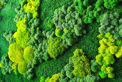 decorative moss for interior decoration. green texture