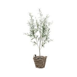 Decorative Oleander tree planted storage basket isolated on white background.