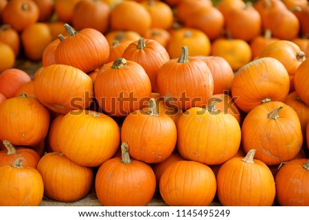 Decorative orange pumpkins on display at the farmers market in Germany. Orange ornamental pumpkins in sunlight. Harvesting and Thanksgiving concept.
