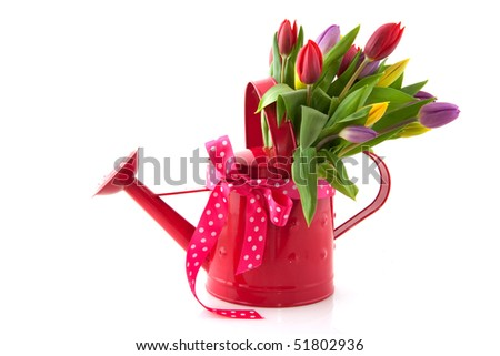 Decorative pink watering can with cheerful bouquet tulips