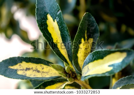 Decorative plants. Decorative leaves. #1033272853