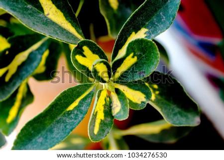 Decorative plants. Decorative leaves. #1034276530