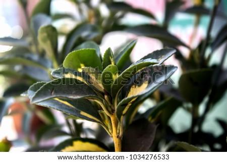 Decorative plants. Decorative leaves. #1034276533