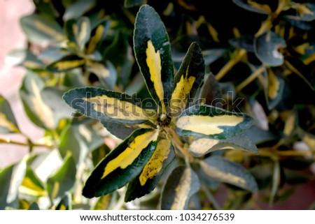 Decorative plants. Decorative leaves. #1034276539