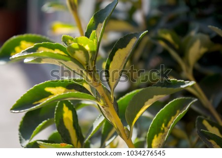 Decorative plants. Decorative leaves. #1034276545