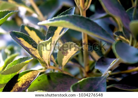 Decorative plants. Decorative leaves. #1034276548