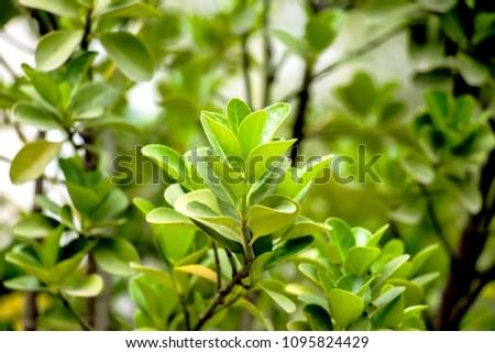 Decorative plants. Decorative leaves. #1095824429