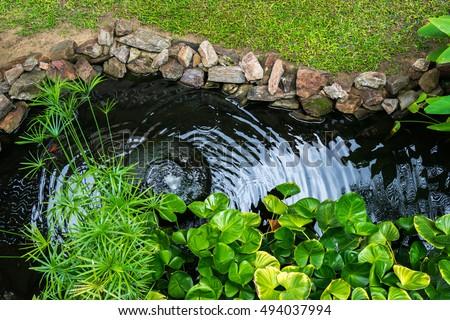 Images for Ornamental pond fish golden