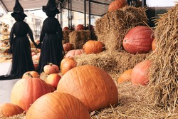 Decorative pumpkins at farm market stands on sheaves of hay .Thanksgiving holiday season and Halloween Scary decorations with black witches. Kids trick or treat