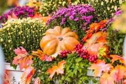 Decorative pumpkins from the Golden autumn festival in Moscow, near red square, the Kremlin. Halloween decor with various pumpkins, autumn vegetables and flowers. Harvest and garden decoration.