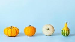 Decorative pumpkins on light blue background. Thanksgiving, Halloween concept