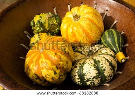 Decorative pumpkins or cucumber vegetable, summer crop, background