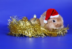 Decorative red cub of a rabbit in New Year's surroundings