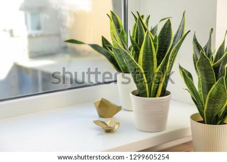 Decorative sansevieria plants on windowsill