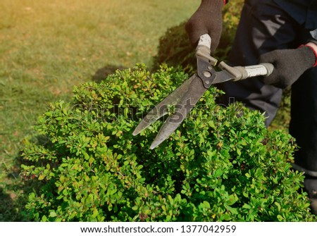 decorative shearing of shrubs with pruning shears #1377042959