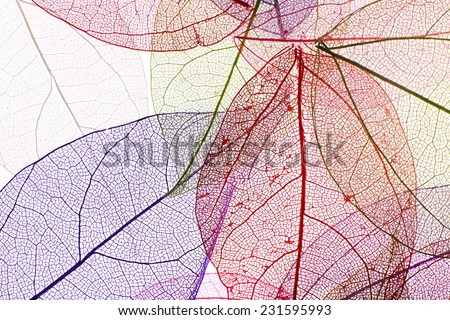 Decorative skeleton leaves background - Shutterstock ID 231595993