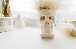 Decorative skull sculpture with funny artificial hair.
