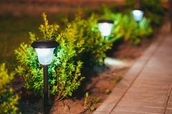 Decorative Small Solar Garden Light, Lanterns In Flower Bed In Green Foliage. Garden Design. Solar Powered Lamps In Row