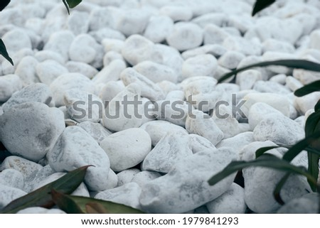 Decorative small white stone pebbles with green leaves. Background, texture, banner  Stock foto ©
