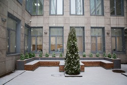 Decorative spruce covered with snow in the courtyard of an office building