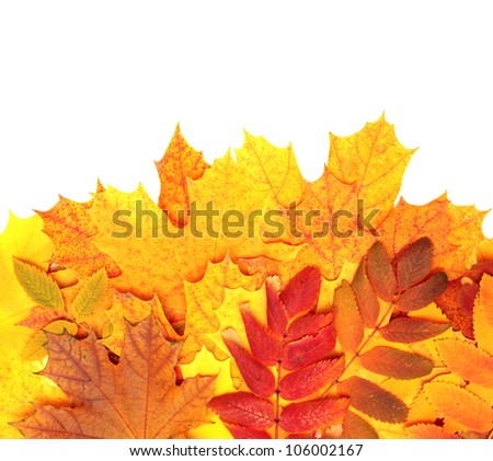 Decorative texture from bright autumn leaves. Isolated over white