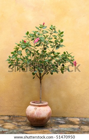 decorative tree with pink lilies in clay pot against stucco wall