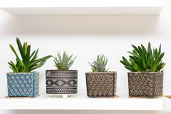 Decorative Tropical Succulent Plants In Geometric Ornamented Art Deco Style Flower Pots. Home Gardening.