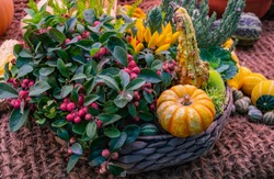 Decorative vegetable flower arrangement in a basket: a snowberry shrub with pink fruits, orange pumpkin, small yellow peppers spray, studded pumpkins and ornamental spiky cucumber. Autumn fest