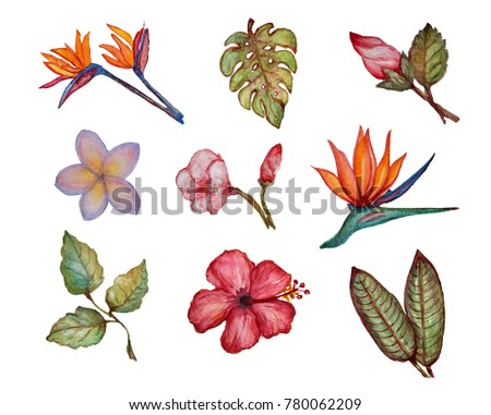Decorative watercolor flowers and leaves clipart, design elements. Can be used for cards, invitations, banners, posters, print design. Exotic, tropical background