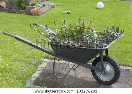 decorative wheelbarrow planted with various flowers in a cottage garden.