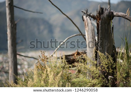 decorative wooden snag in the forest in summer - Shutterstock ID 1246290058