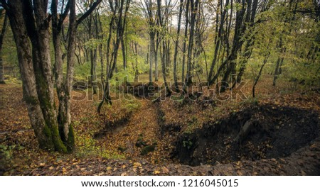 Deep and long ravine in the autumn forest, among the trees, the ground is covered with fallen yellow leaves