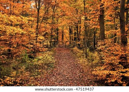 stock-photo-deep-autumn-in-forest-47519437.jpg