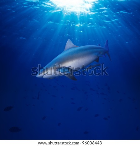 Deep blue ocean water surface dangerous bull-shark highlighting with sunrays looking for victim